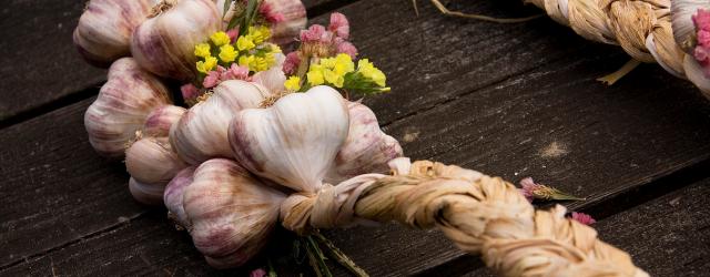 Garlic Festival 2014
