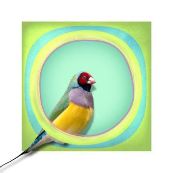CaptureFest exhibit: Space In Bird @ Studio 730 | Vancouver | British Columbia | Canada