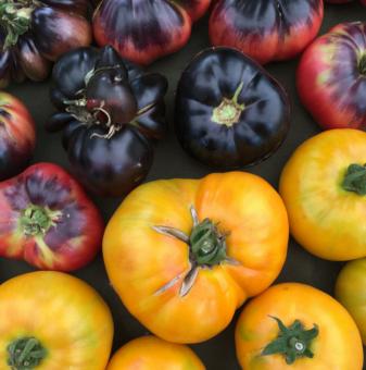 Vancouver Farmers Market Tomato Festival @ Trout Lake Farmers Market, John Hendry Park | Vancouver | British Columbia | Canada